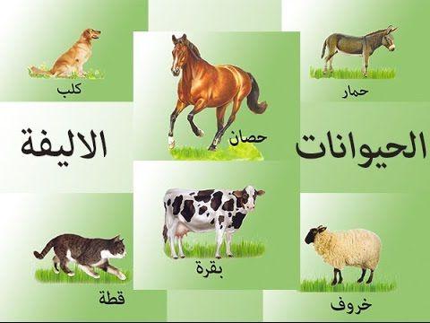 اصوات الحيوانات الاليفة واسمائها باللهجة المصرية Kids Learning Books Comics