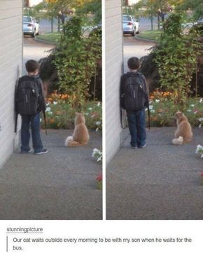 I bet they're having deep conversations about life and catnip.