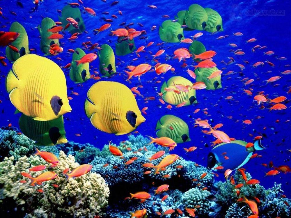20 lugares onde a natureza não poupou cores: Grande Barreira de Coral, Austrália