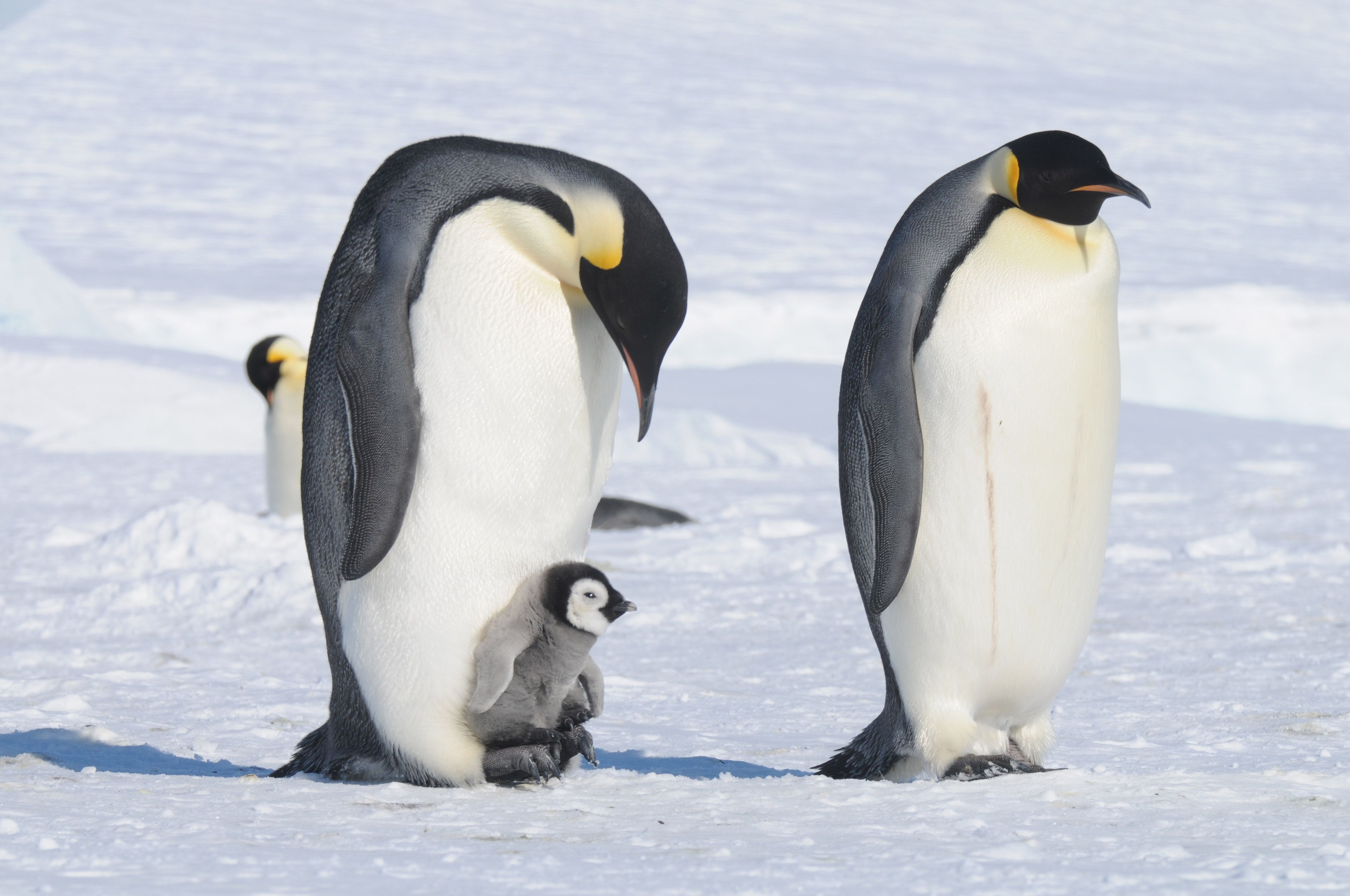My March To The Emperor Penguins An Expedition Tale From