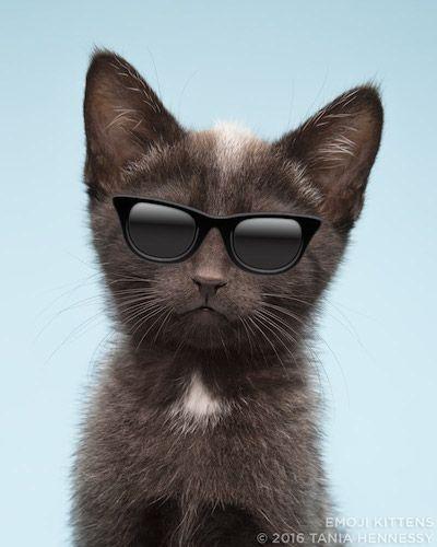 cool cat emoji kittens