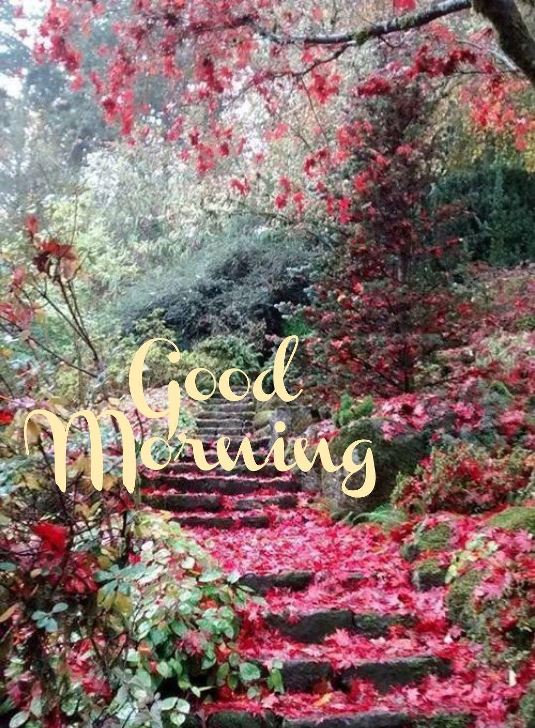 Good Morning Greetings Good Morning Nature Good Morning Greetings Good Morning Flowers
