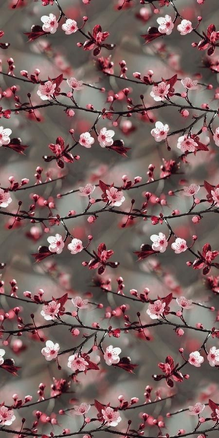 Dogwood Cherry Blossoms Something Else In 2020 Floral Wallpaper Iphone Floral Wallpaper Beautiful Nature Wallpaper Beautiful seasonal wallpaper for iphone