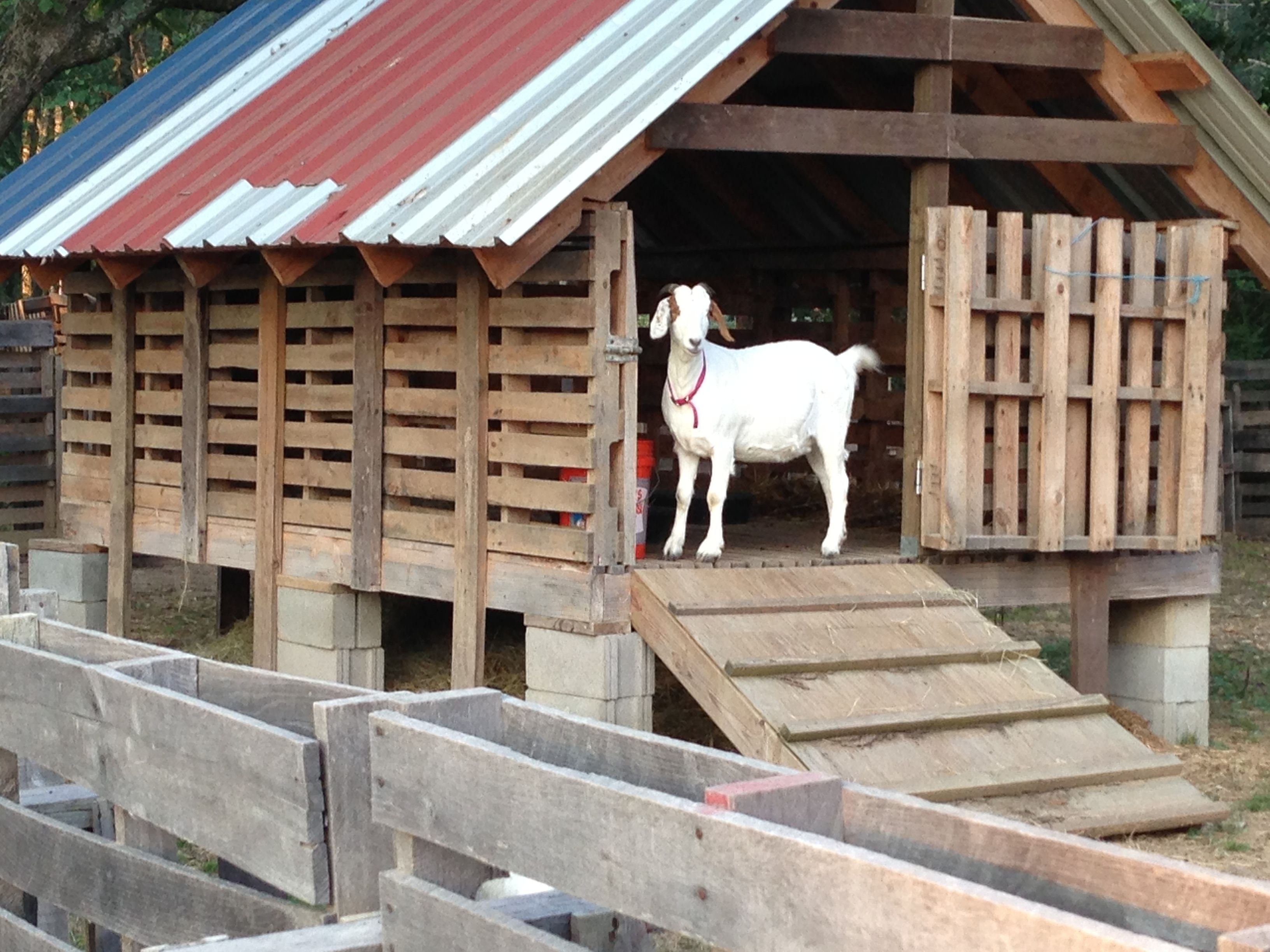 our and round pin photo their for goats view bale of hay feeder feeders visit more to homemade