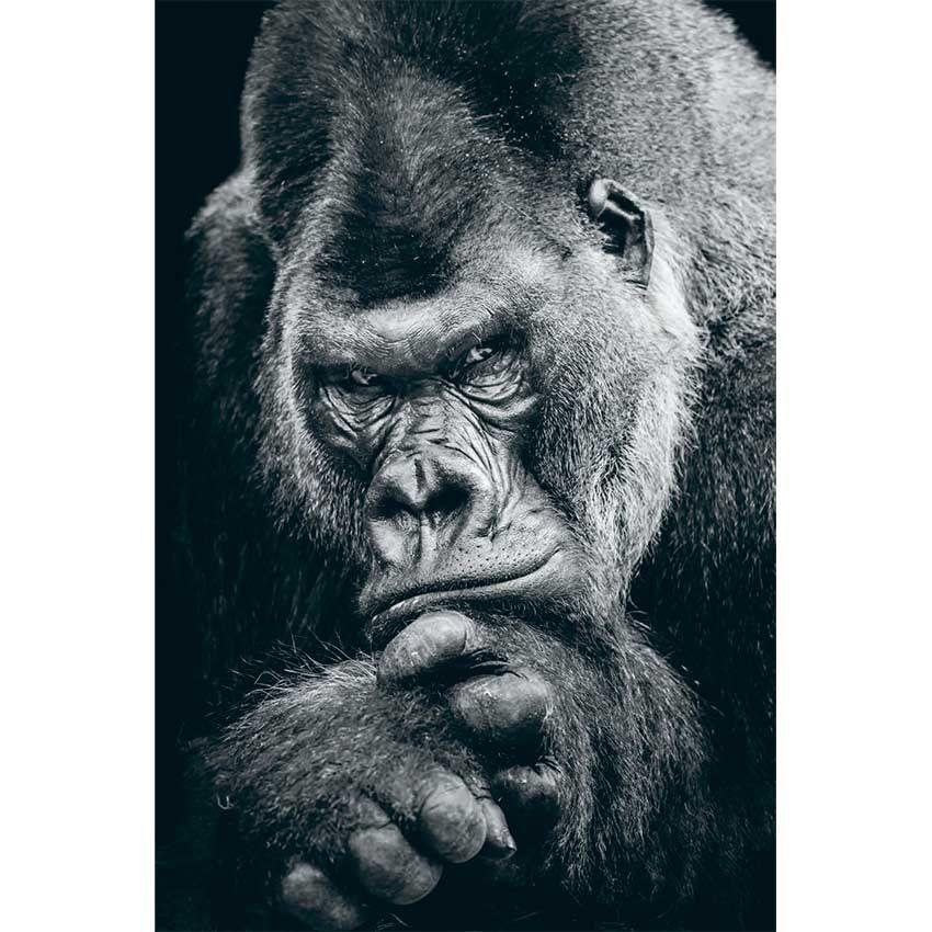 Tableau gorille noir et blanc 4 50dc64c7b8ea4871a2db32e4b99c5e48