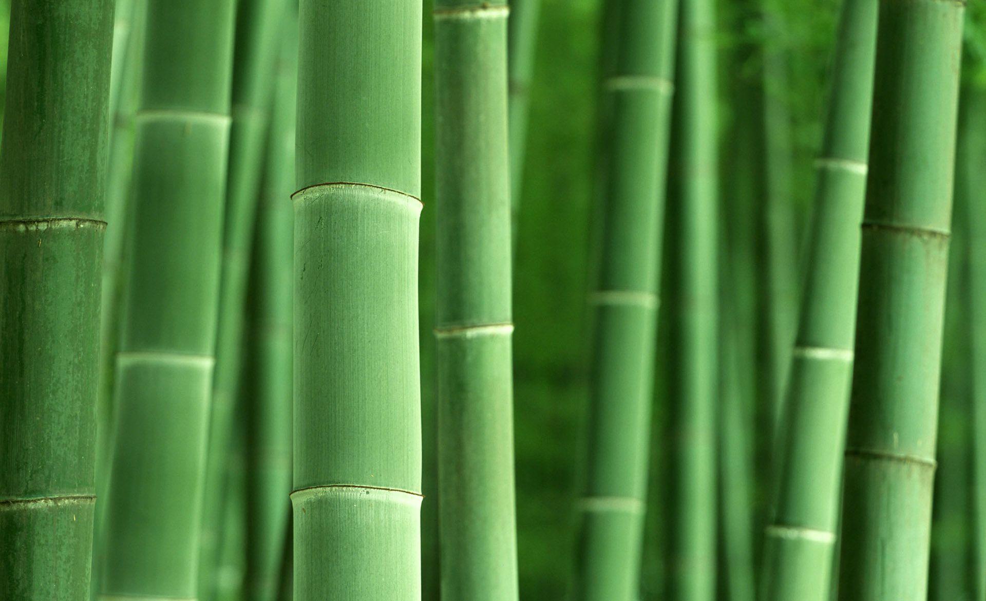 Free Hd Bamboo Wallpapers Bamboo Wallpaper Removable Wallpaper