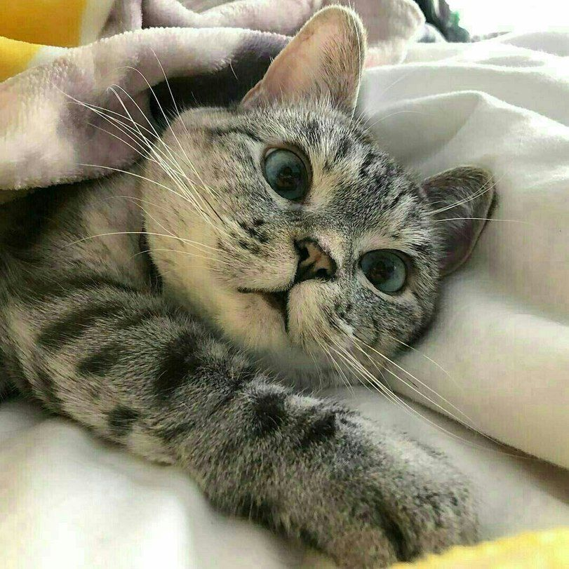 знать картинки кошек мур она песчаной возвышенности