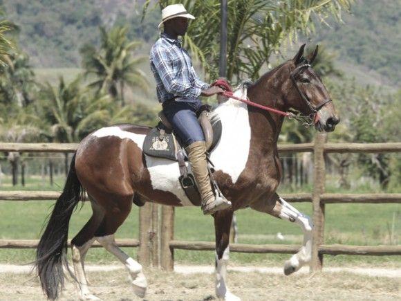 Mustang do Barulho - Campolina gelding