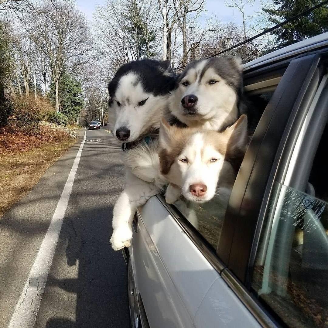 I Love Dogs Ich Liebe Hunde Hunde Hunde Babys