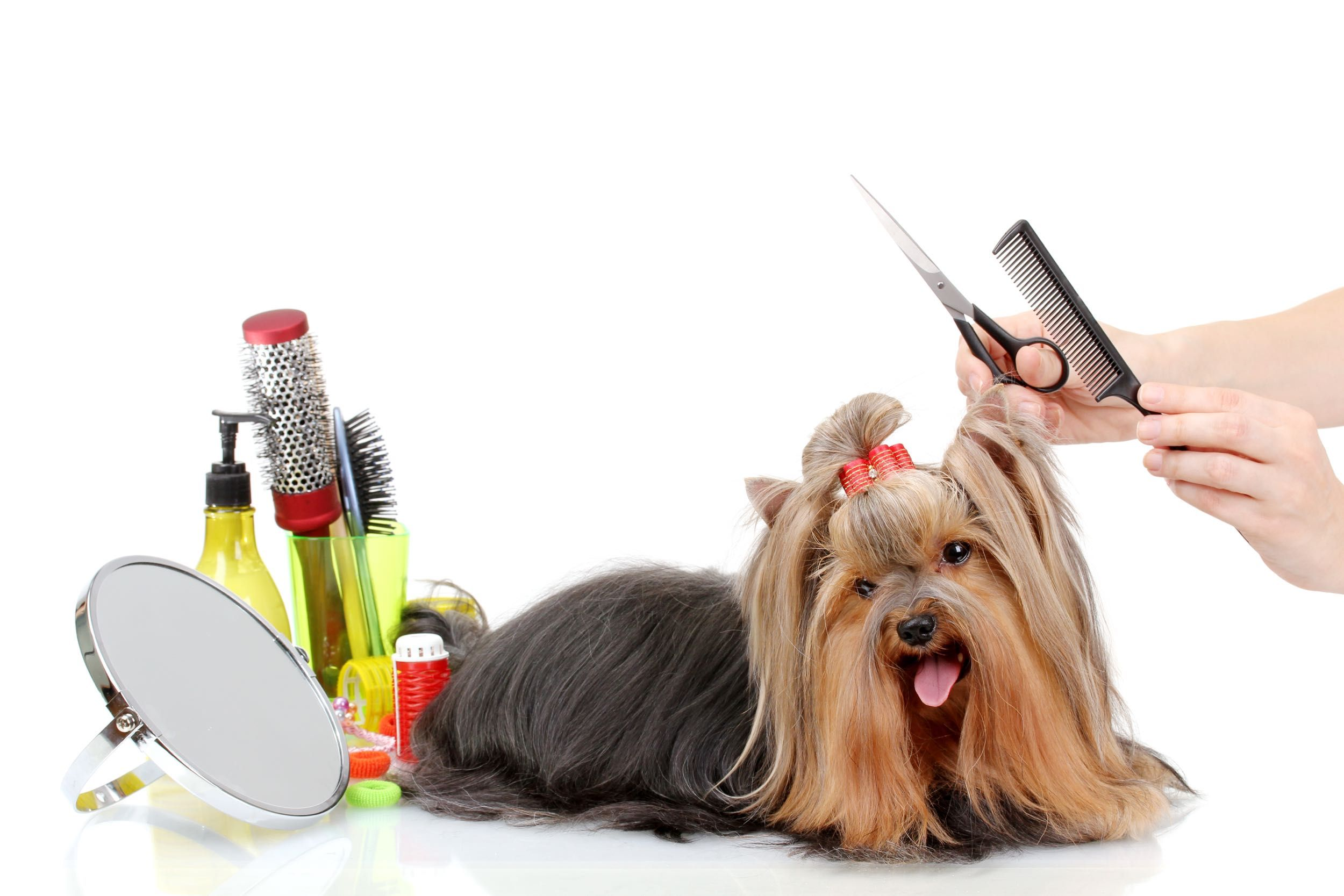 Strange But Real Tax Laws From All 50 States Pet Grooming Dog Grooming Tips Pet Grooming Salon