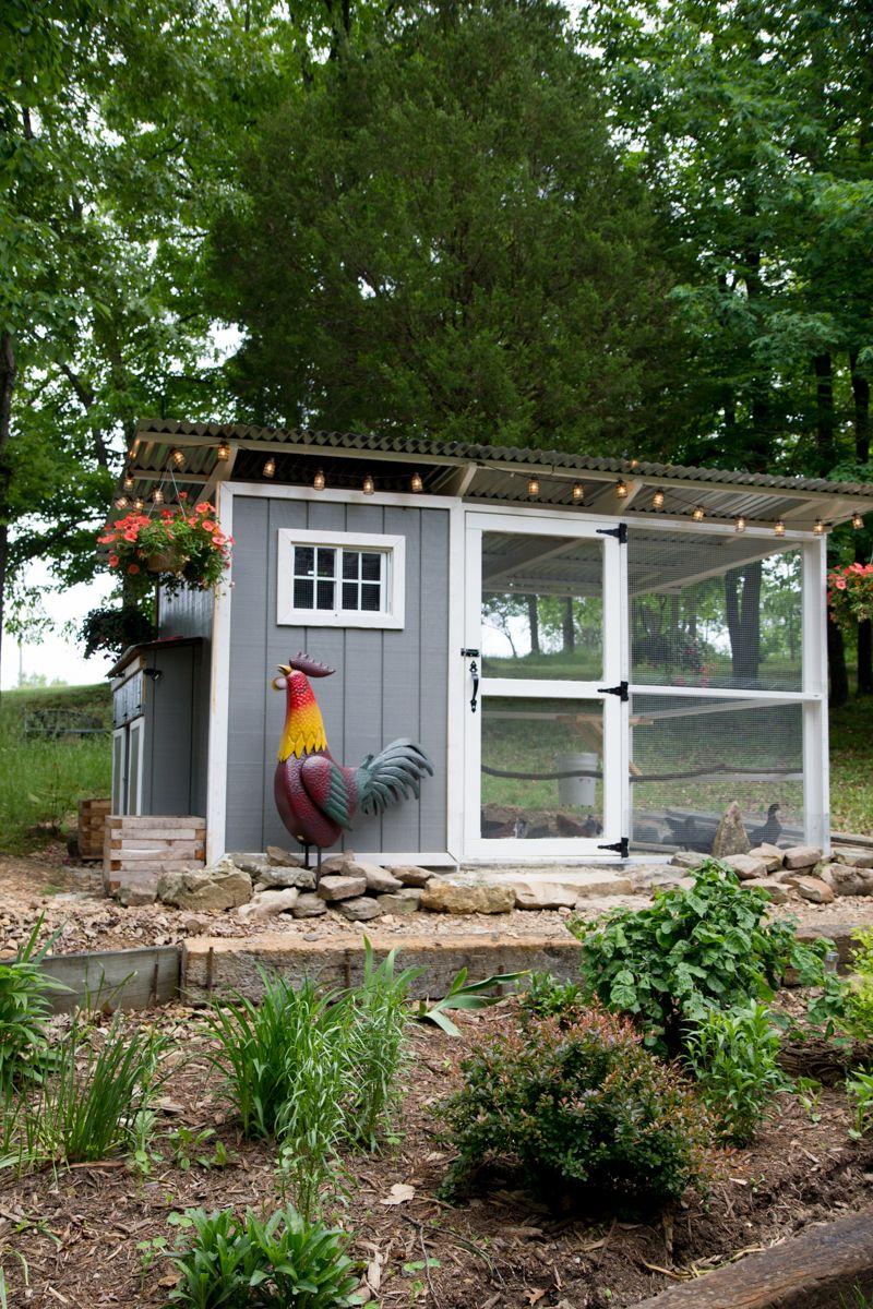 In The Chicken Coop Backyard Chicken Coops Small Chicken Coops Chickens Backyard