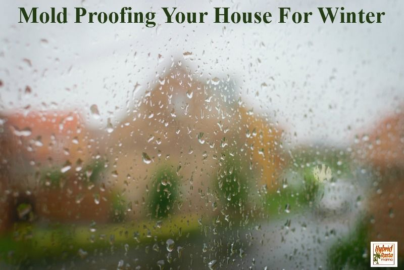 Mold Proofing Your House A DIY Guide Toxic Mold