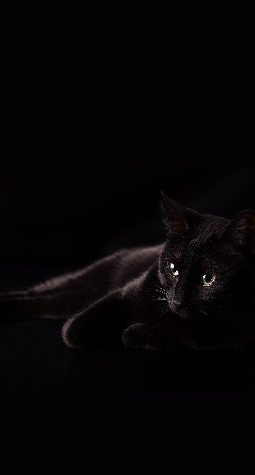 Pin De Miriam Armenta En Kittens Gatos Bonitos Gatos Kawaii