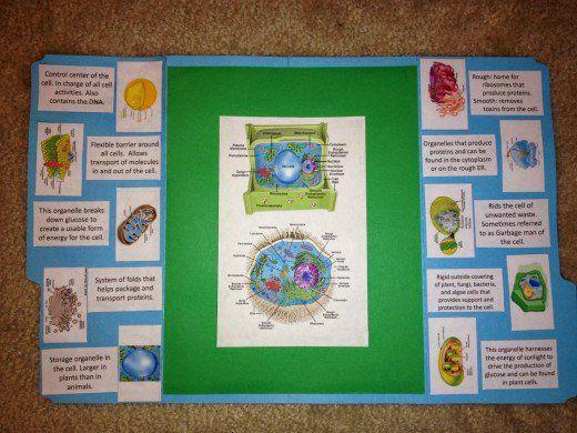 Super & Animal Cells Lapbook EW42