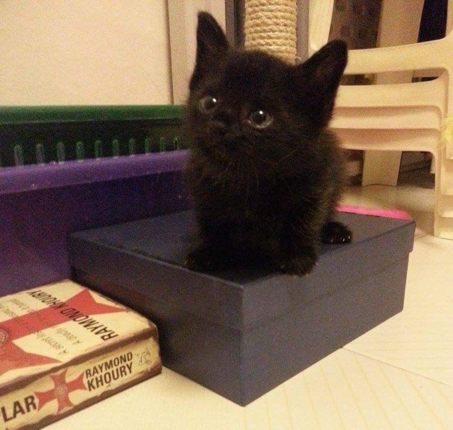 A Tiny 4 Week Old Kitten Was Found Alone By The Roadside Quietly Waiting For Help Right After They Got Him Some Food He Cats Kittens Cutest Cats And Kittens