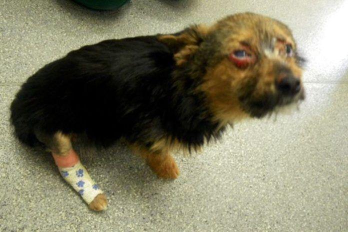 Σοκ! Έφηβοι σπάνε τα πόδια και βάζουν φωτιά σε σκύλο για να σπάσουν πλάκα! Crazynews.gr