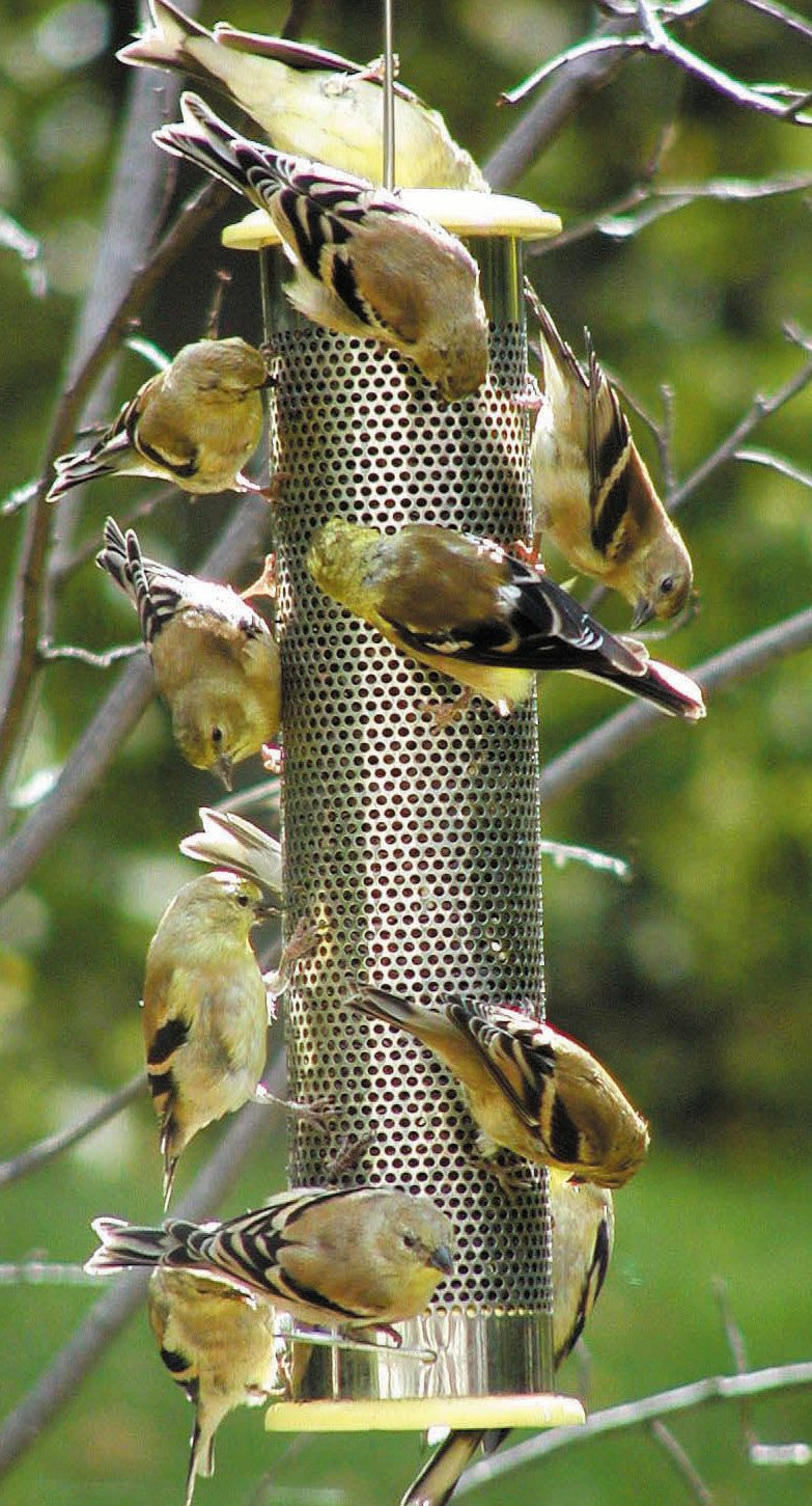 shop feeders thistle finch mount post hood harmony bird pmwhd feeder with