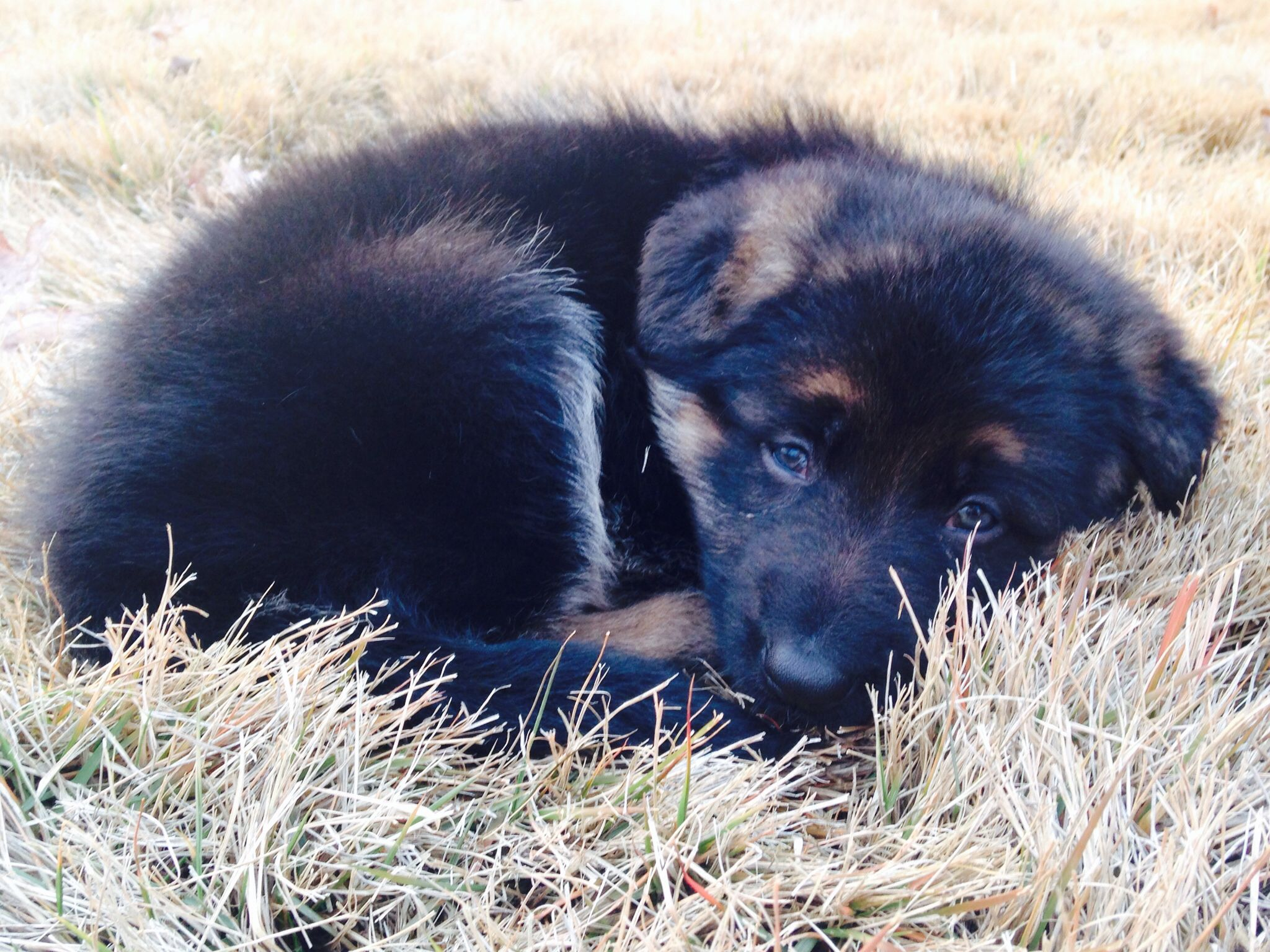 Park Art|My WordPress Blog_Corgi Puppies For Sale In Fredericksburg Va