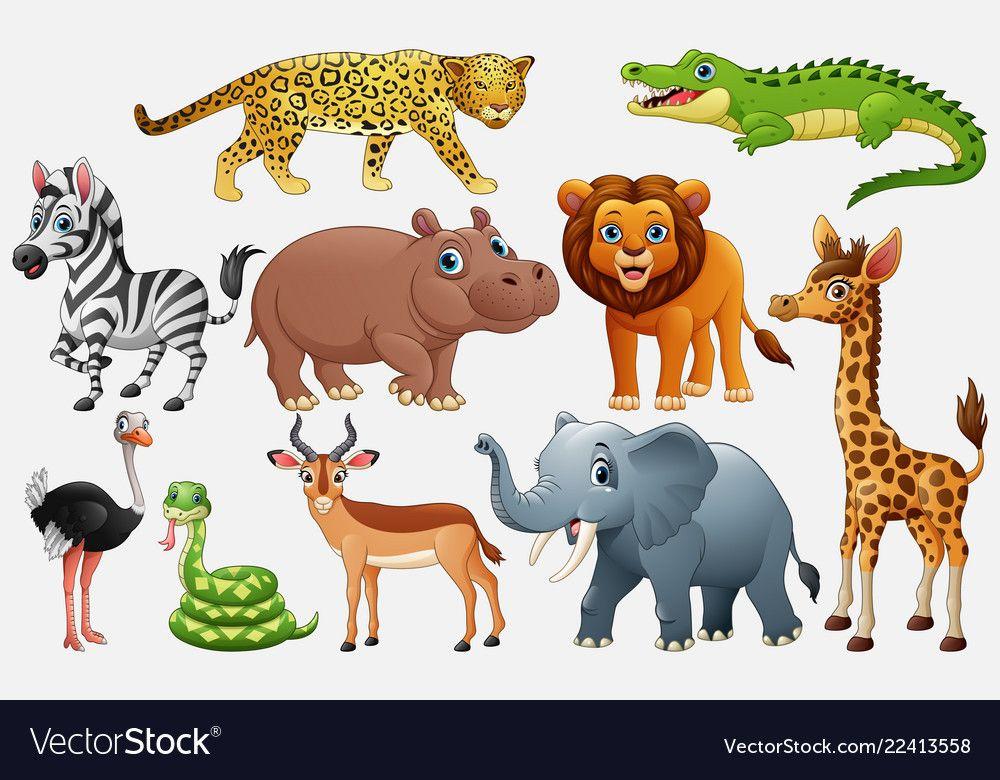 Cartoon wild animals on white background vector image on