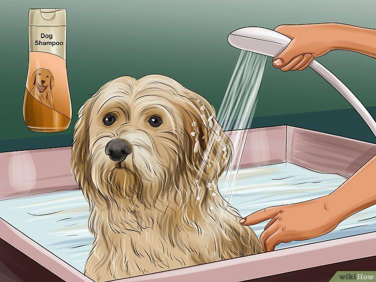 Groom a goldendoodle goldendoodle dog grooming dog breeds