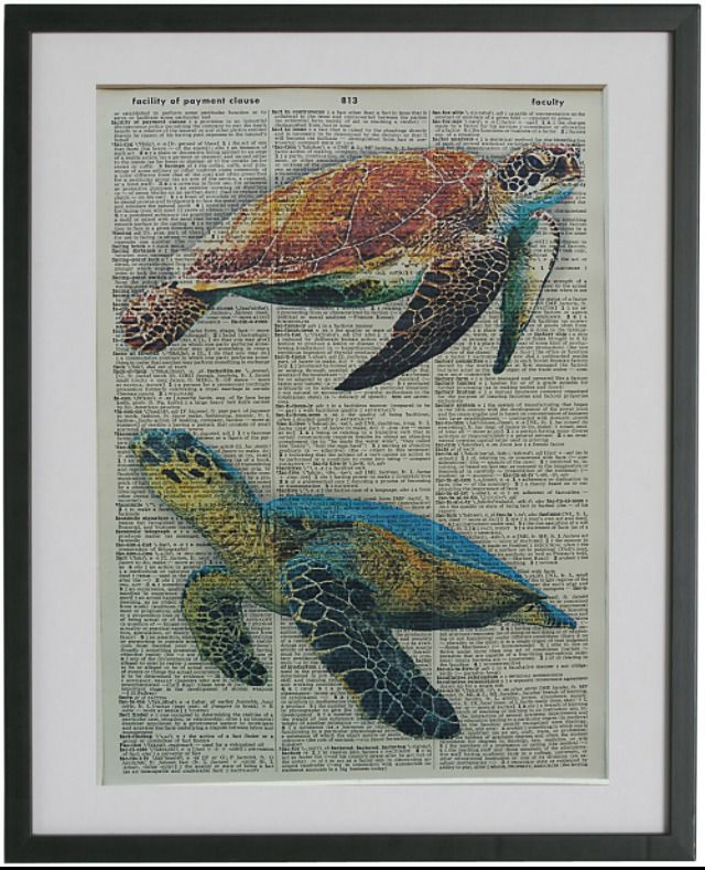 Turtle Print No 487 Nautical Poster Wall Decor Sea