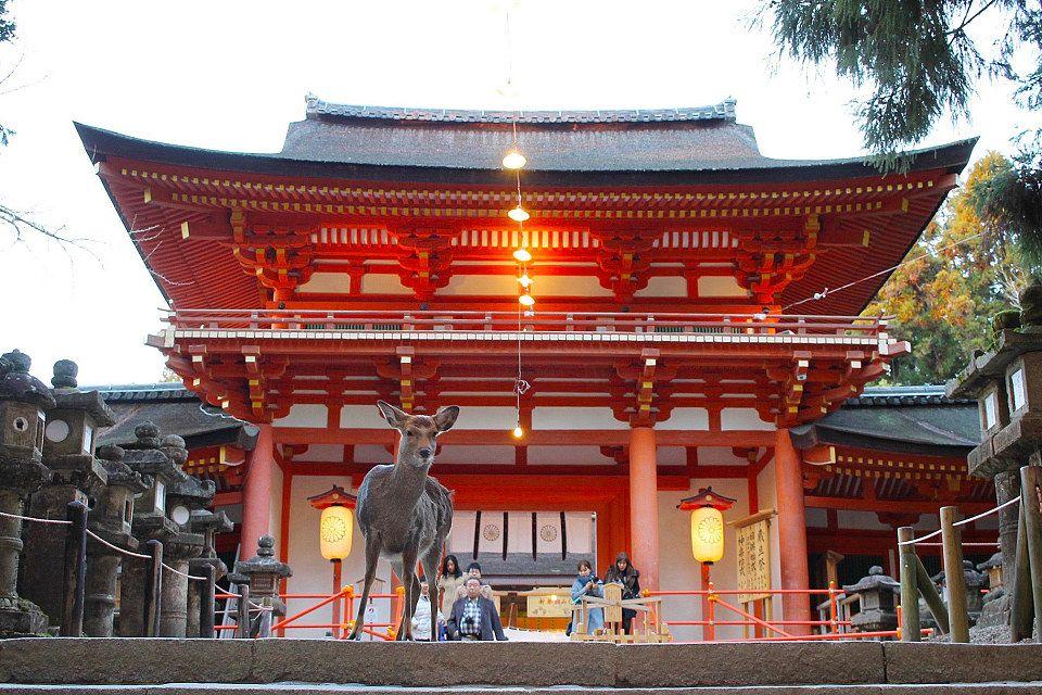 奈良県でインスタ映えするおすすめスポット を紹介します 天然記念物である鹿がたくさんいる癒しの公園 奈良公園 や約15万本もが咲き誇る人気のコスモス寺 般若寺 など インスタグラムをはじめsnsでたくさんイイネがもらえるような写真 映えする場所を 実際に奈良を