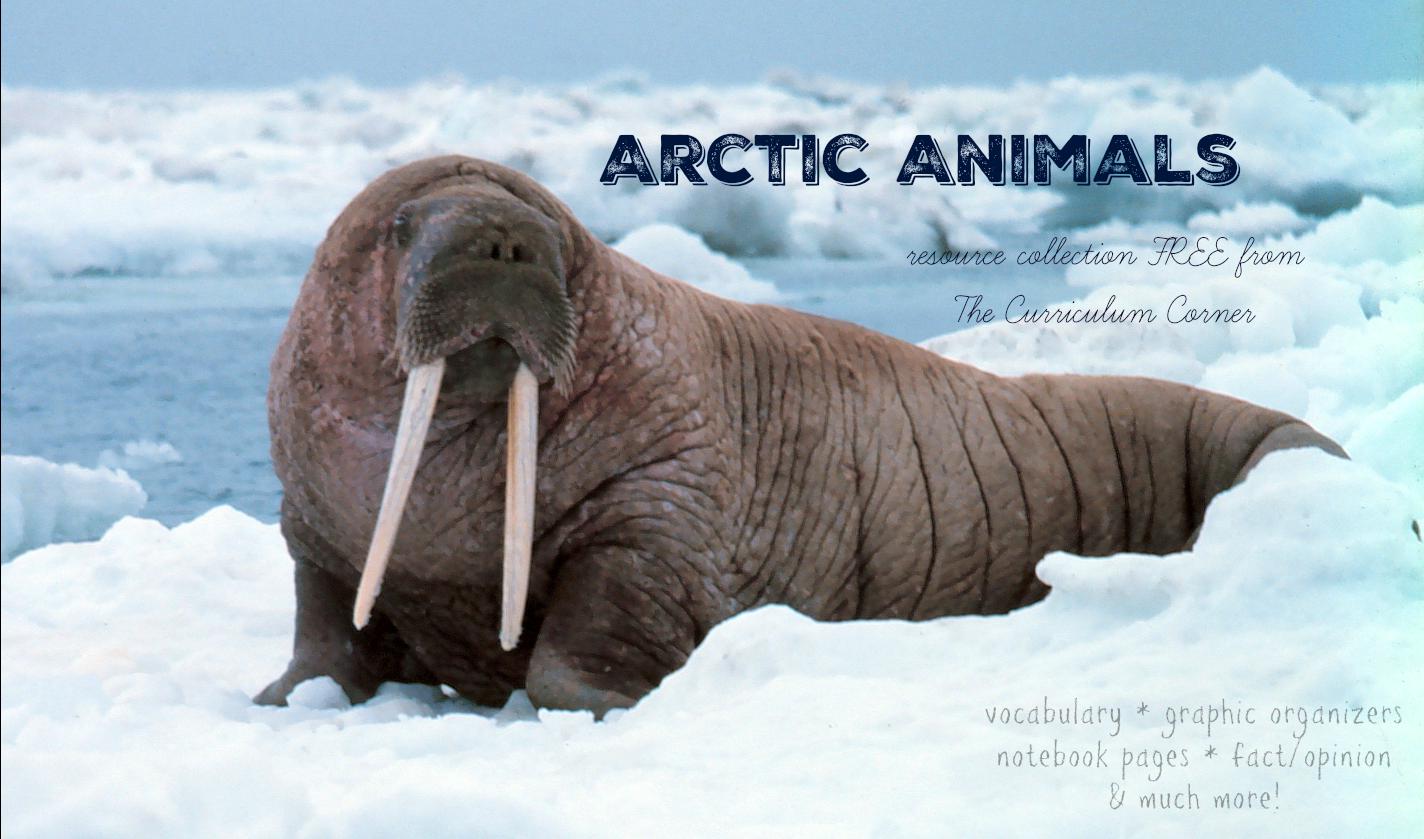 Focus On Arctic Animals