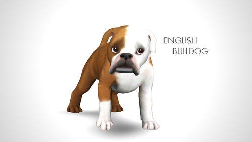Morgana Banana Improved English Bulldog By Morganabananasims