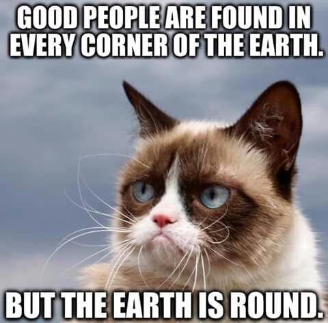Pin By Elin Linden On Grumpy Cat Funny Grumpy Cat Memes Grumpy Cat Meme Grumpy Cat Humor
