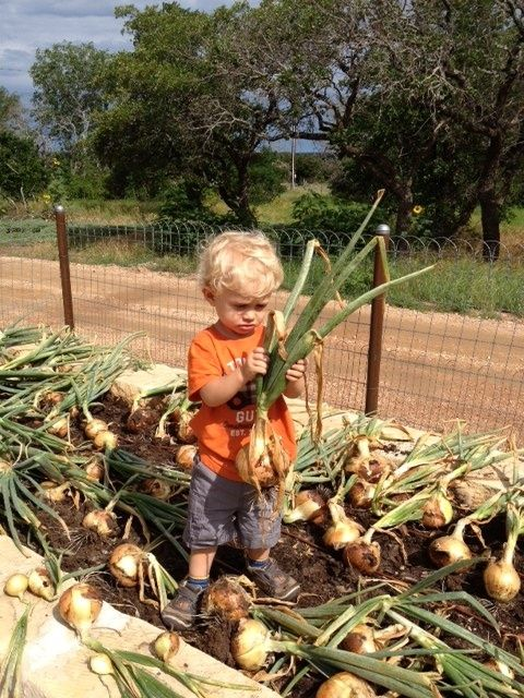 Farm: Gathering the #harvest.