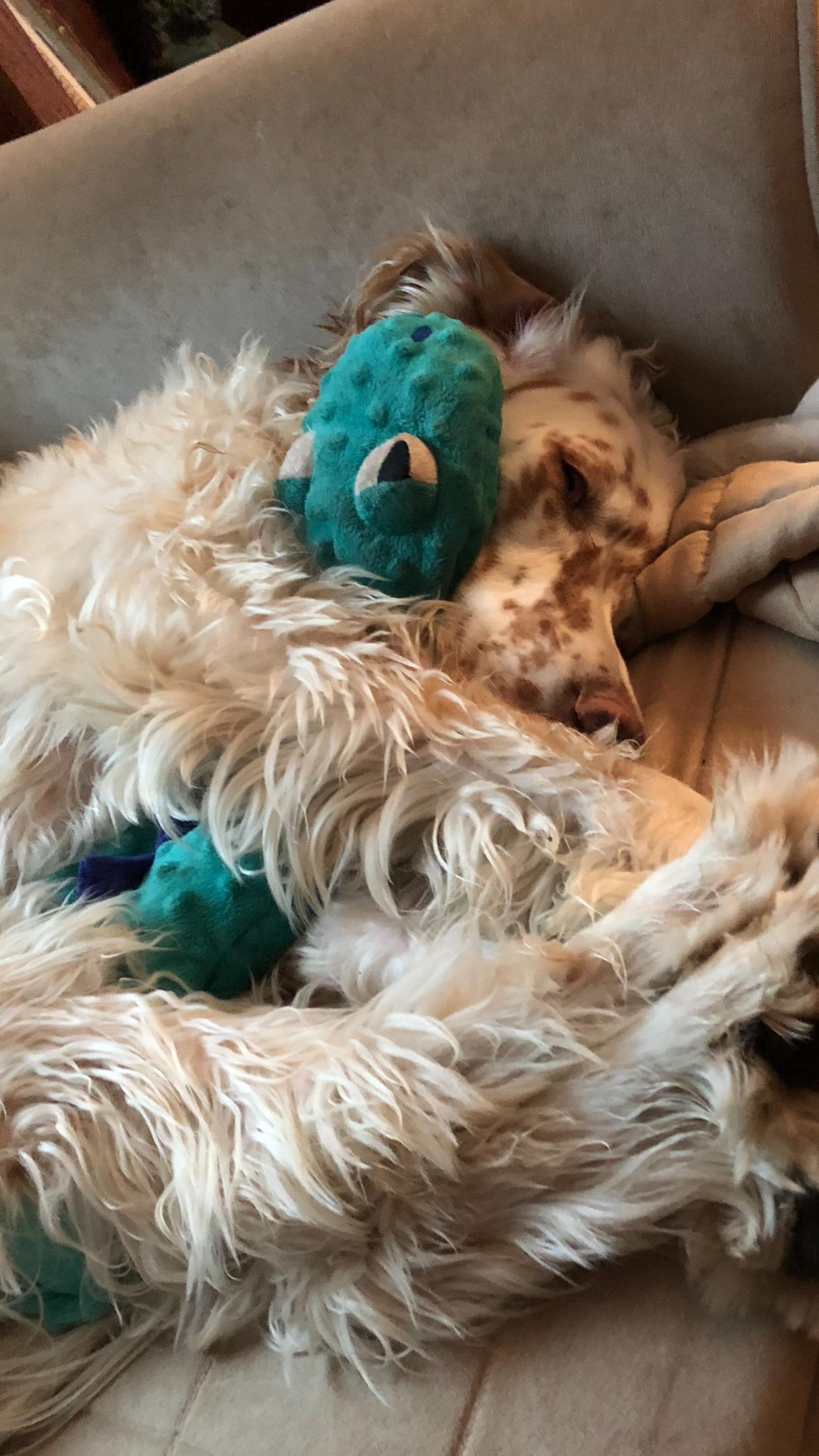 Penny, having a little cuddle. Dogs, Cuddling, Animals