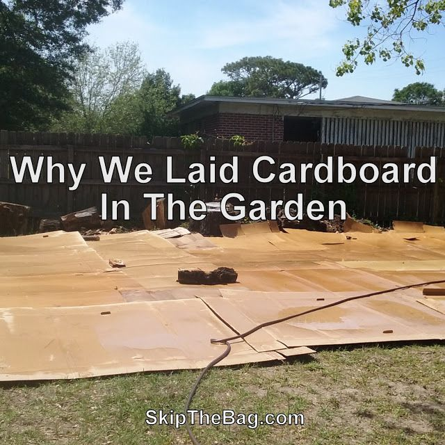 Why We Laid Cardboard Down In The Garden