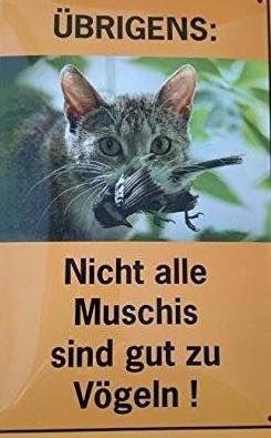 Katze mal anders – lustig