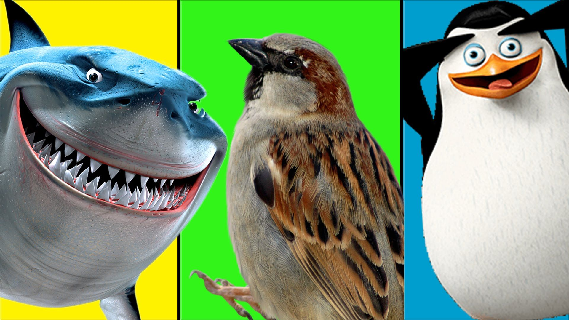 sea animals names for children kids learning station bird