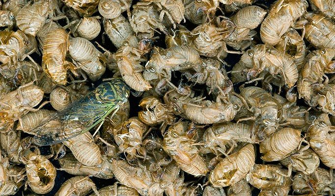 Pin by Carter Watson on The Insect Car Food, Meat, Shrimp