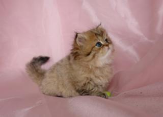 #kitten #smushies