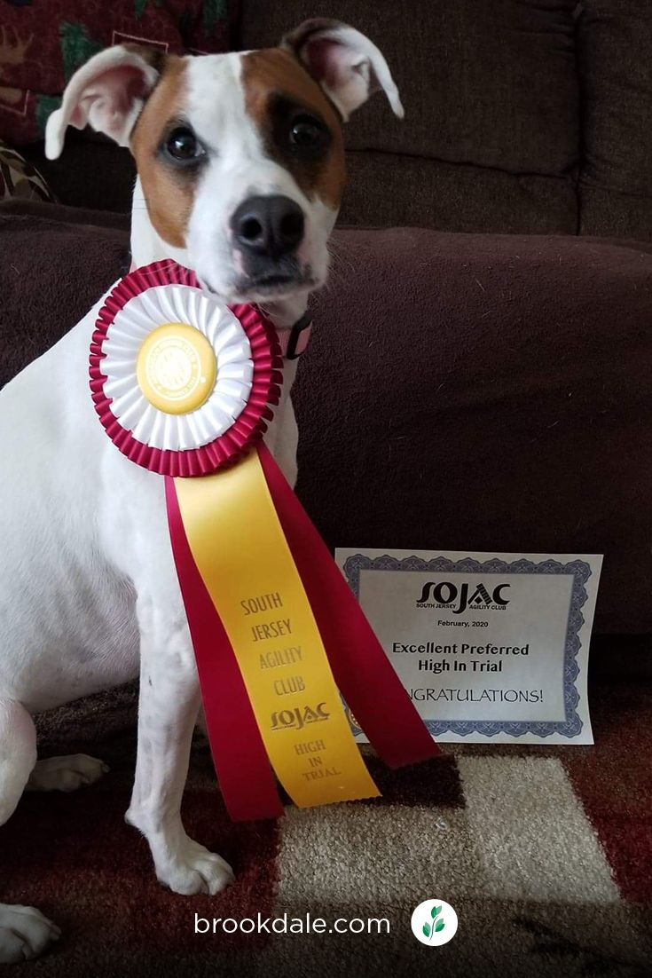 cookiedogaward (1).jpg in 2020 Therapy dogs, Congrats