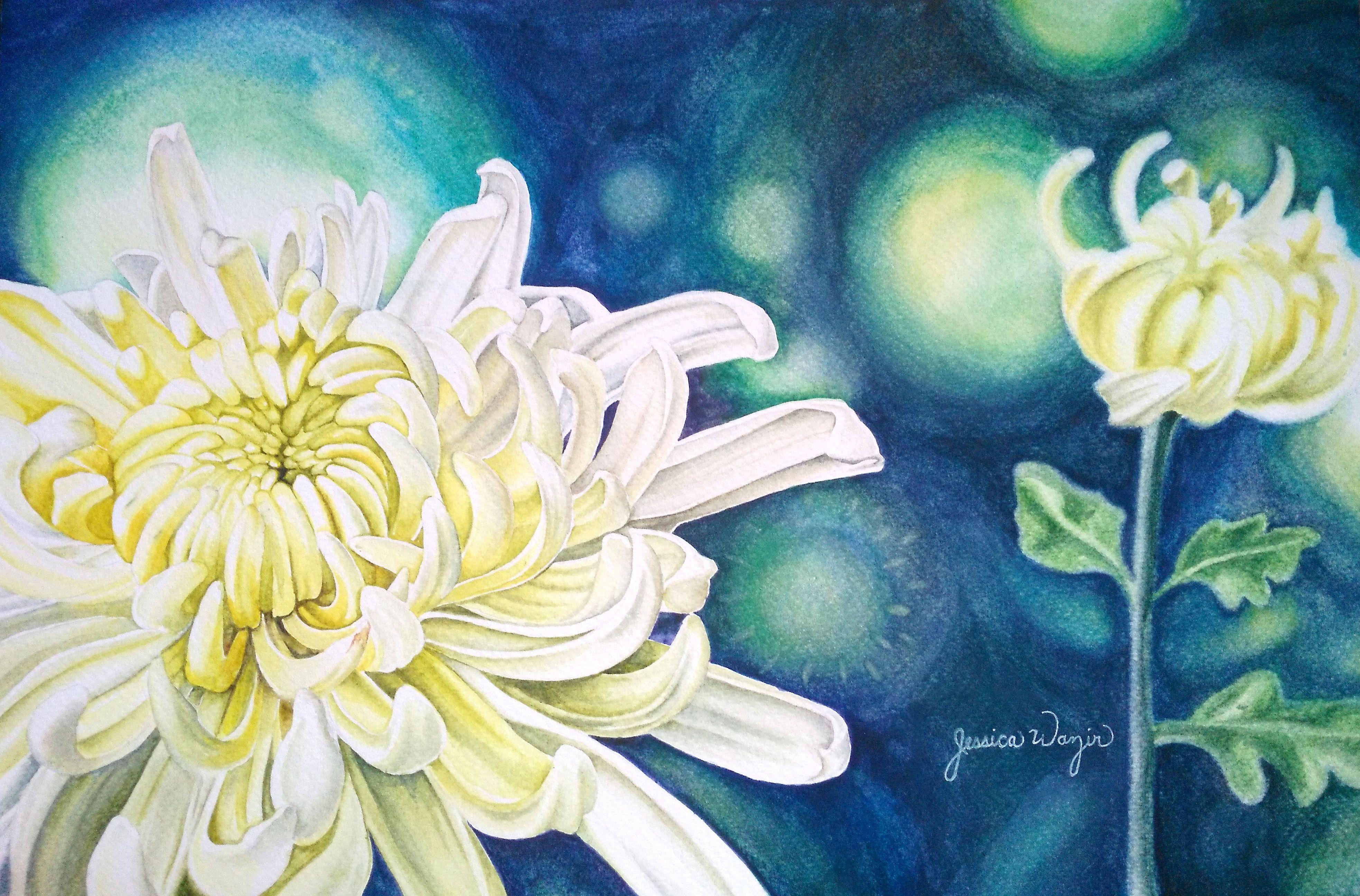 White Chrysanthemum Watercolor Flowers Chrysanthemum Watercolor Watercolor Flowers Flower Painting