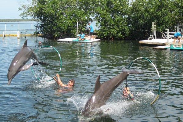 Pin By Florida Keys Exp On Pics From Key Largo Florida Florida Travel Destinations Florida Vacation Key West Vacations