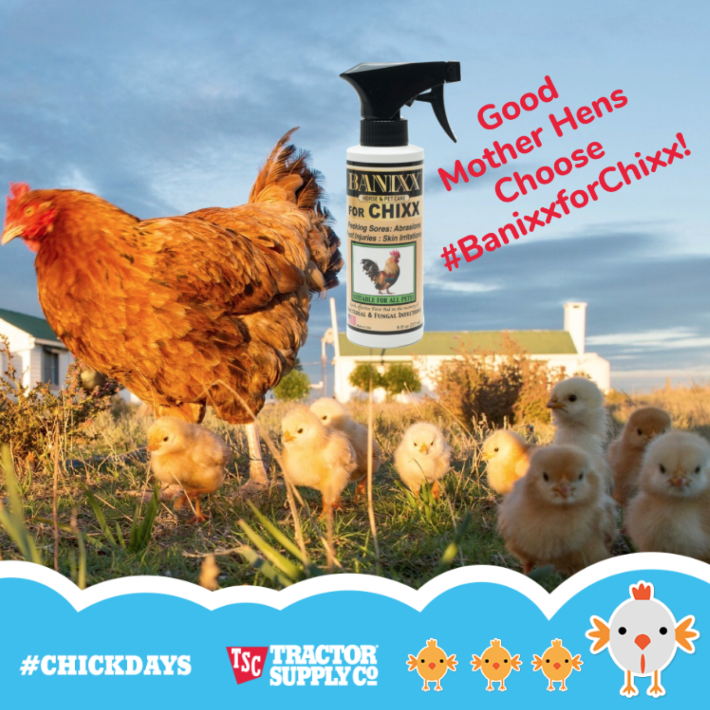 Make Your Own Tractor Supply Co Chickdays Meme Upload Your Photo Then Add Fun Stickers And Frames Everyone Fun Stickers Tractor Supply Co Tractor Supplies