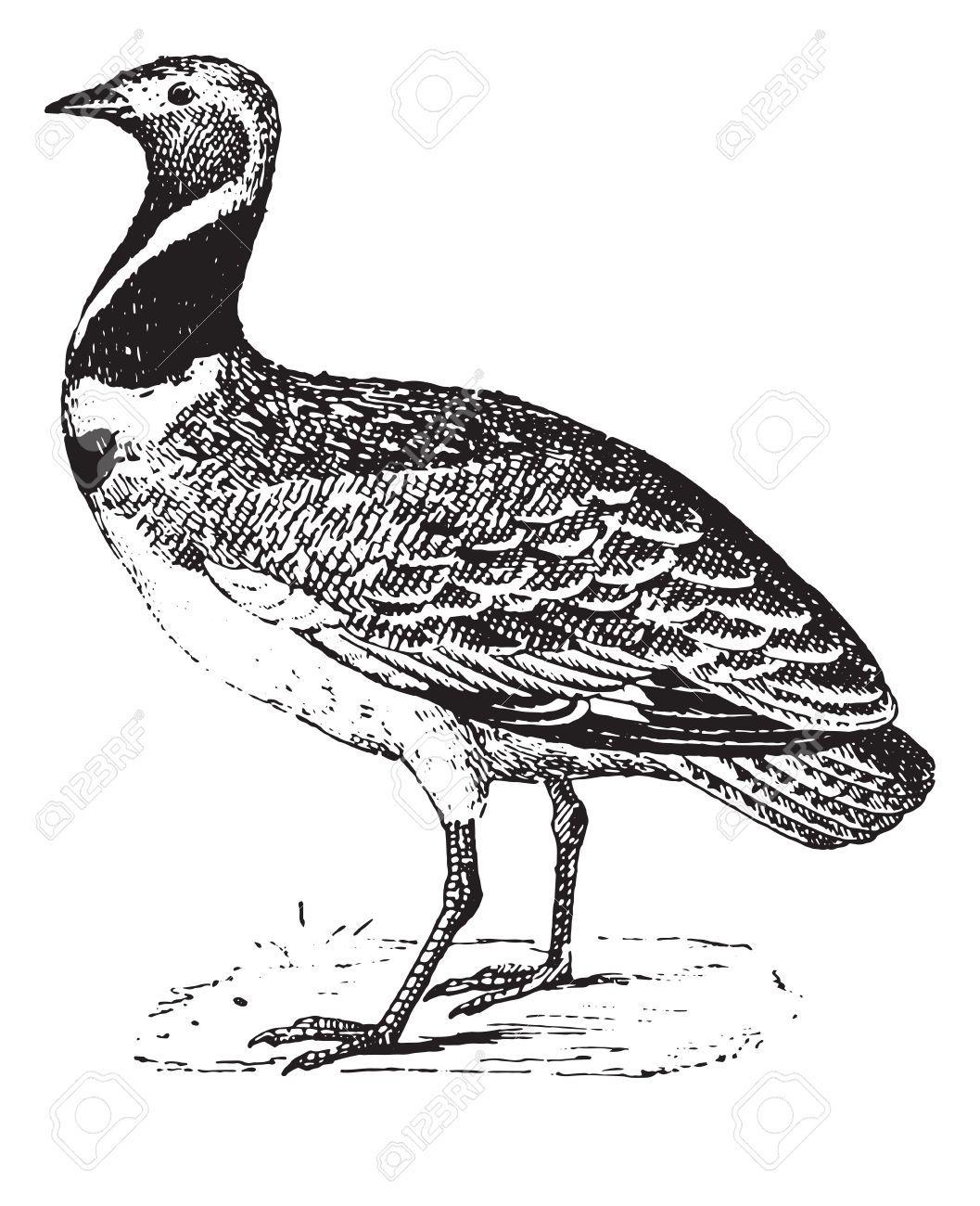 Birds In Ca