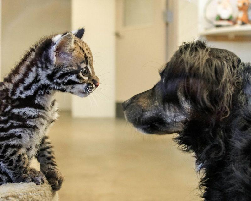 Meeting new friends.