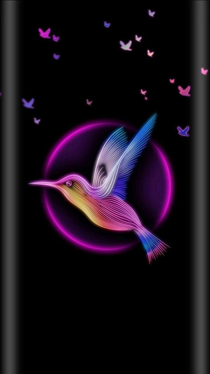 Black And Pink Pink Wallpaper Iphone Hummingbird Wallpaper Samsung Wallpaper