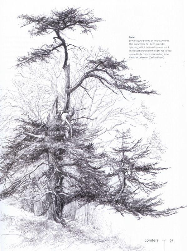 How To Draw And Paint Evergreen Trees Arboles Y Arbustos Pintura Y Dibujo Arbustos