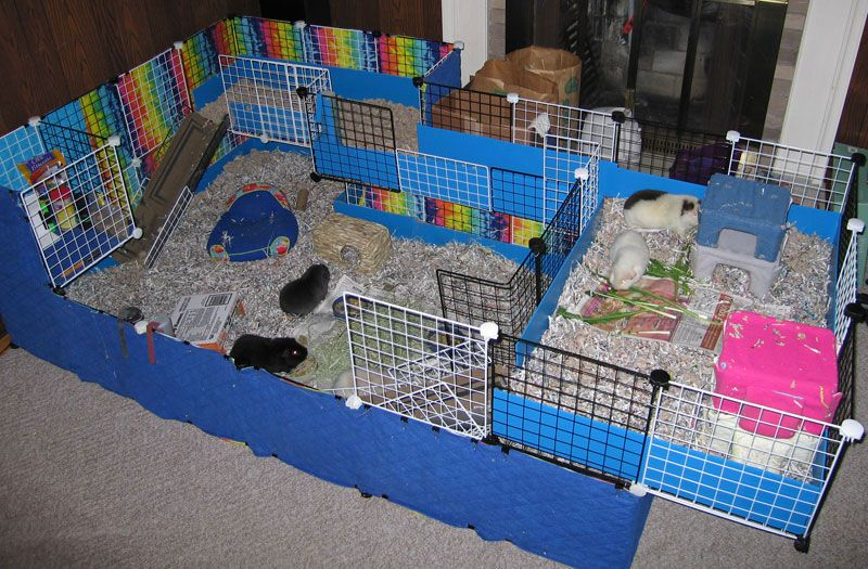 Its a guinea pig cage with nearly 40 sq ft I love it! Its my guinea pigs's dream.