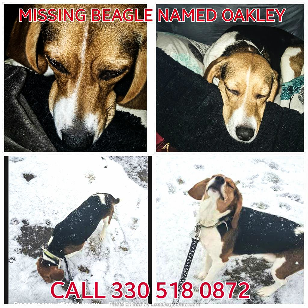 Lost dog beagle canfield oh united states 44406