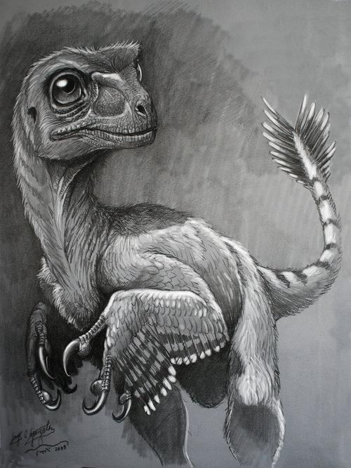 feathered dino pencil sketch | Feathered Dinosaurs ...