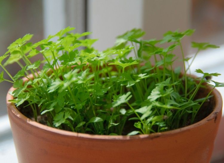 20 Edible Plants That Are Easy To Grow Indoors Growing 400 x 300