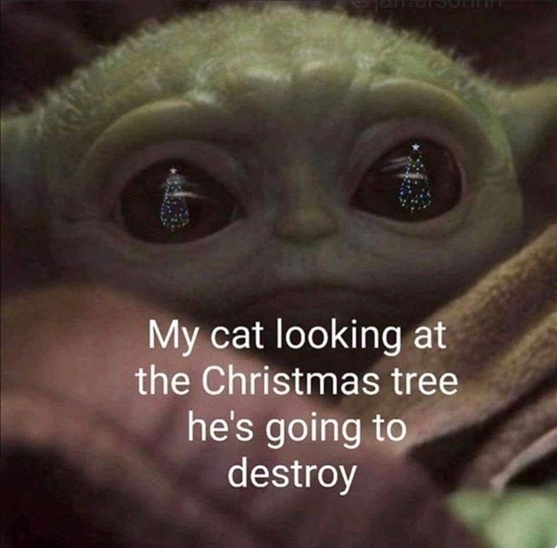 We Re Not Surprised Cats Have Managed To Take Over Baby Yoda Memes Too Yoda Meme Funny Cat Memes Christmas Memes