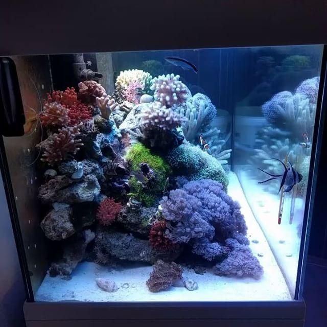 Video Time Reefscape Aquarium Aquascaping Aquascape Fish Reefing101 Reeferaddict Reefpack Reeftank Reef Reef Tank Aquascape Fresh Water